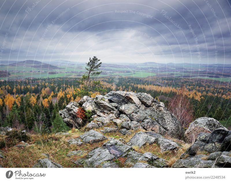 In die Ferne Umwelt Natur Landschaft Pflanze Wolken Horizont Schönes Wetter Baum Gras Sträucher Feld Wald Hügel Felsen wild Fernweh Idylle Aussicht Herbst