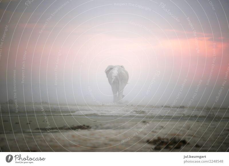 Auf Wegen Himmel Natur Ferien & Urlaub & Reisen Landschaft Tier Ferne Gefühle Freiheit Sand Stimmung Horizont Wildtier Kraft Abenteuer Sehnsucht Sturm