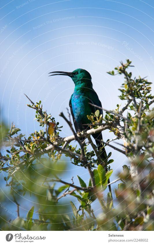 ein Liebling Ausflug Ferne Freiheit Umwelt Natur Pflanze Baum Blatt Ast Park Tier Wildtier Vogel Tiergesicht Schnabel Nektarvogel 1 exotisch klein nah natürlich
