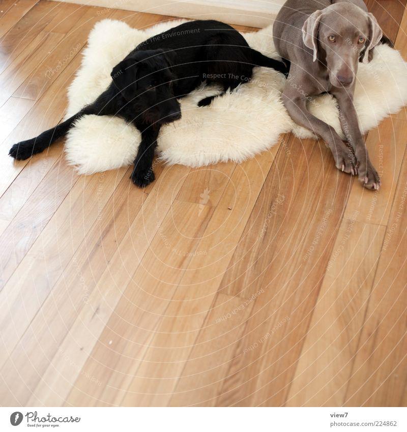 Farbharmonie Hund weiß Farbe Erholung Tier schwarz grau Holz Linie liegen Stimmung braun Tierpaar authentisch modern ästhetisch