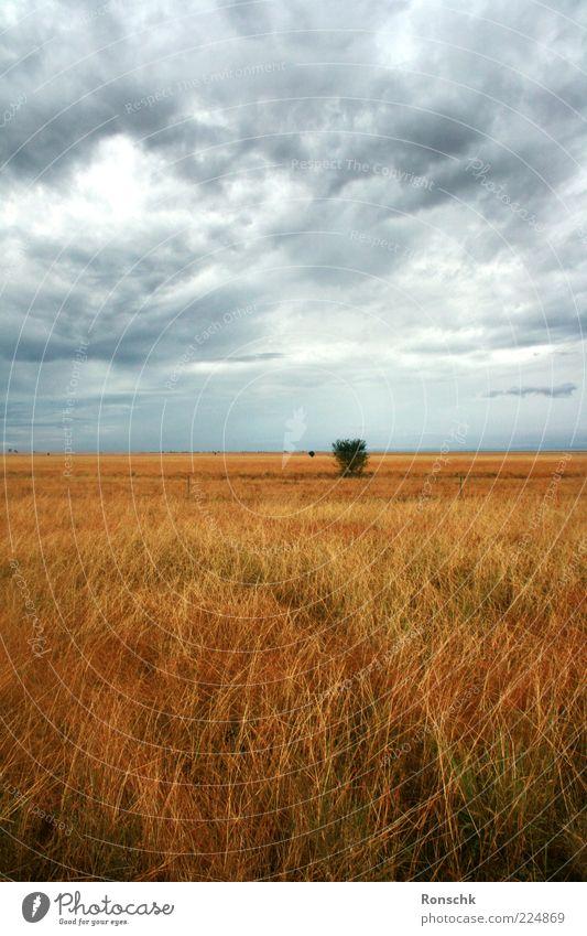 Freies Feld Natur Himmel Wolken Gewitterwolken Einsamkeit Bewegung Stimmung Außenaufnahme Menschenleer Kontrast Gras Ferne Wolkenhimmel Textfreiraum oben
