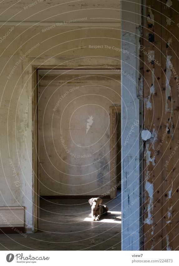 Lichteinfall Wand Freiheit Mauer Hund braun Tür Raum warten sitzen liegen Perspektive Innenarchitektur trist authentisch Häusliches Leben Baustelle