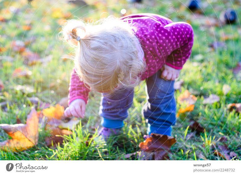 !Trash! 2017   Kleiner Entdecker Mensch feminin Kind Kleinkind Mädchen 1-3 Jahre entdecken mehrfarbig Herbst herbstlich Herbstlaub Abenteurer Gegenlicht