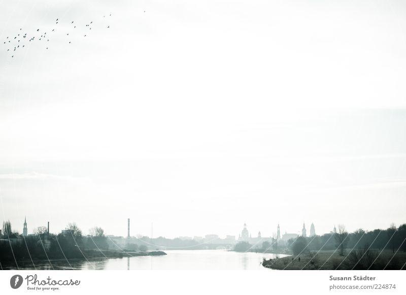 vor der Eiszeit Stadt Baum Ferne Haus Vogel fliegen Energie Kirche Turm Fluss gut Dach Tiergruppe Wildtier Flügel Dresden