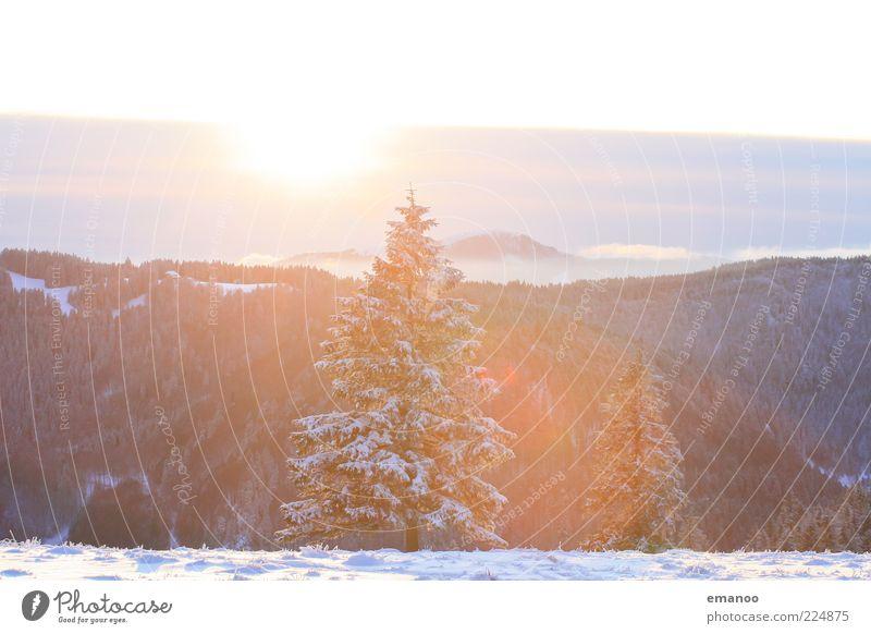 die schwarzwaldtanne Natur Baum Pflanze Sonne Winter Ferne Wald kalt Schnee Umwelt Berge u. Gebirge Landschaft hell Wetter Eis ästhetisch