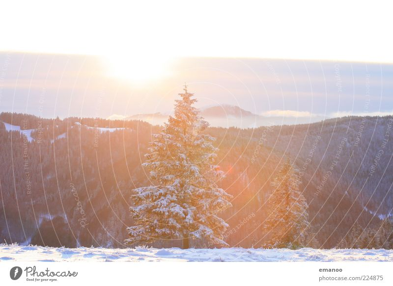 die schwarzwaldtanne Winter Schnee Berge u. Gebirge Umwelt Natur Landschaft Pflanze Sonne Klima Wetter Eis Frost Baum Wald Alpen Schlucht ästhetisch hell kalt
