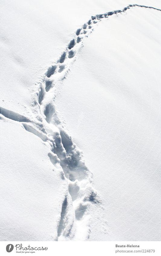 Auf den Spuren von - Tomte Tummetott? Natur weiß Winter Schnee Umwelt Landschaft hell Eis Feld glänzend gefährlich Frost geheimnisvoll Fußspur frieren Fährte