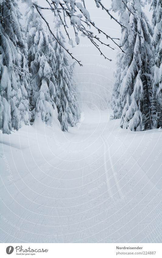 Märchenland Winter Schnee Natur Urelemente Klima Eis Frost Wald Wege & Pfade Fußspur Linie Erholung weiß Freude anstrengen ästhetisch Einsamkeit elegant