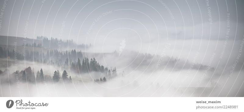 Panorama des Waldes bedeckt durch tiefe Wolken. Herbstregen und -nebel Natur Ferien & Urlaub & Reisen Pflanze weiß Landschaft Baum Ferne Berge u. Gebirge Wiese