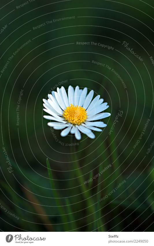 einfach blühen Natur Pflanze Sommer schön grün weiß Blume gelb Blüte Frühling Wiese Garten Textfreiraum Geburtstag Blühend