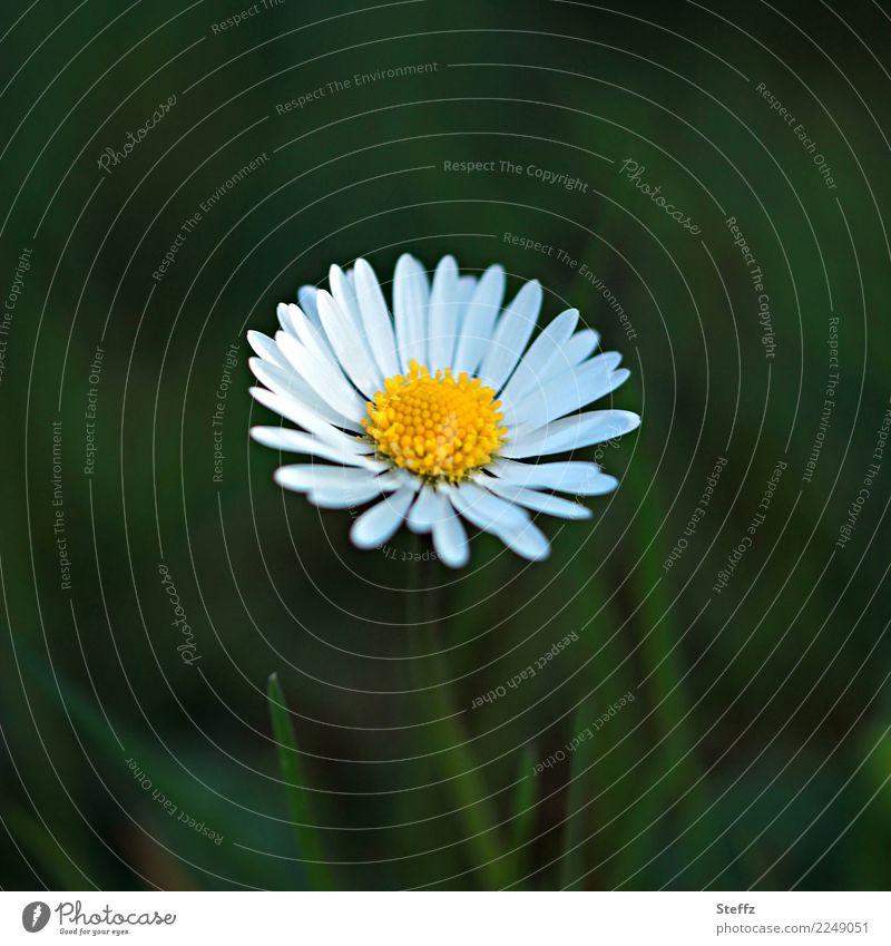 einfach da Natur Pflanze Sommer schön grün weiß Blume gelb Blüte Frühling Wiese natürlich Garten Textfreiraum Blühend