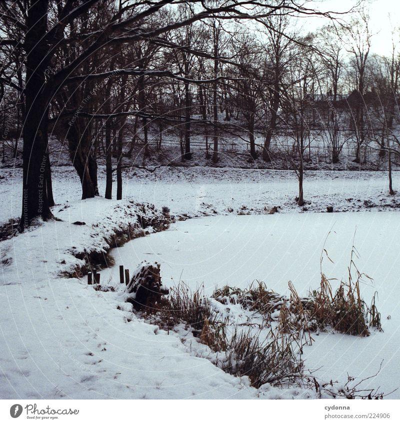 Zugefroren Natur Baum ruhig Winter Einsamkeit kalt Erholung Wiese Schnee Landschaft Umwelt Wege & Pfade Park Eis Zeit Ausflug