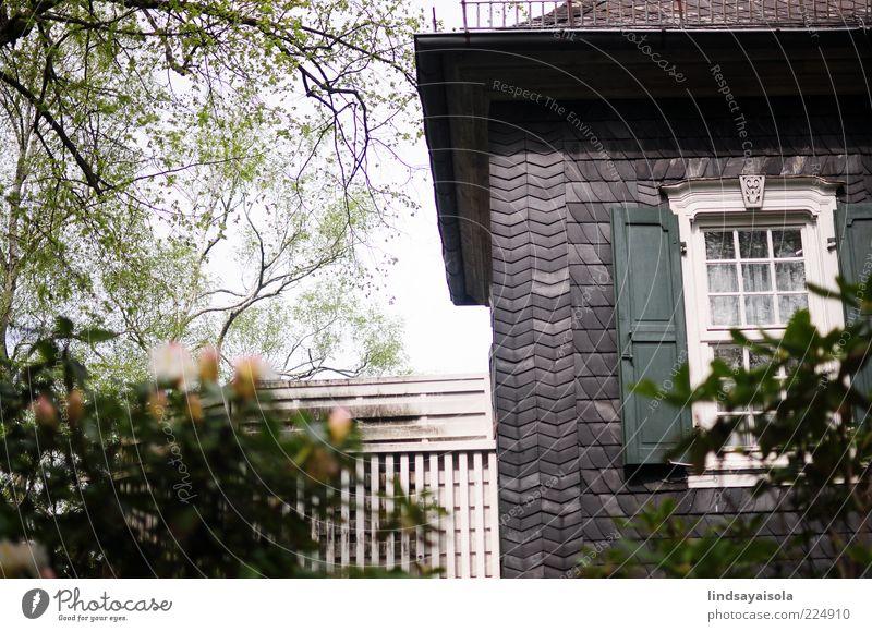 Natur Baum Pflanze Ferien & Urlaub & Reisen Sommer Blume Blatt Haus Erholung Fenster Umwelt Architektur Blüte Garten Frühling Wetter