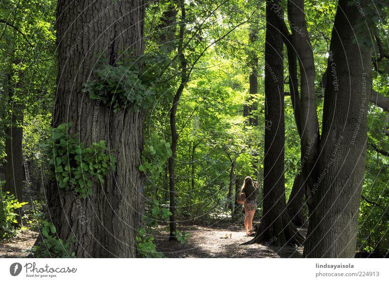 Mensch Frau Natur Jugendliche schön Baum Ferien & Urlaub & Reisen Pflanze Sommer Freude ruhig Erwachsene Wald Umwelt Leben Wetter