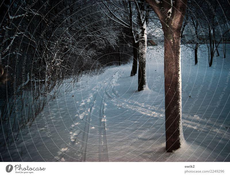 Tunnelblick Umwelt Natur Landschaft Winter Schönes Wetter Eis Frost Schnee Baum Sträucher Park bedrohlich dunkel glänzend kalt achtsam Wachsamkeit geduldig