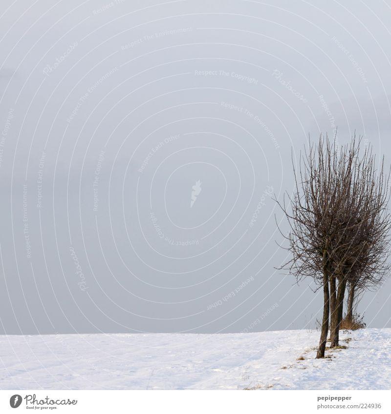 _____II_ Baum Winter kalt Schnee Feld Horizont Zweige u. Äste laublos Schneedecke graue Wolken