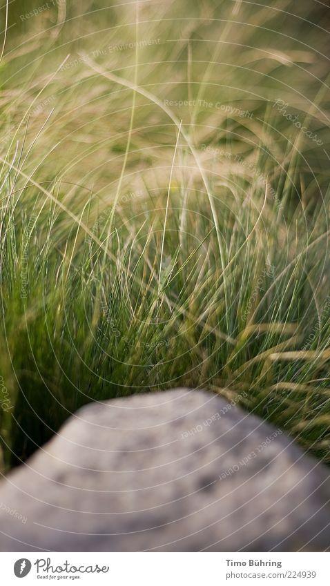 Stein der Weisheit Natur Urelemente Erde Schönes Wetter Gras Sträucher Felsen Freundlichkeit frisch hell schön positiv gelb grau grün Gelassenheit Farbfoto