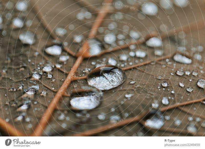 Rain drops Leben Natur Wassertropfen springen sunlight autumn abstract bubble leaf transparent color liquide fresh freshness shining green garden