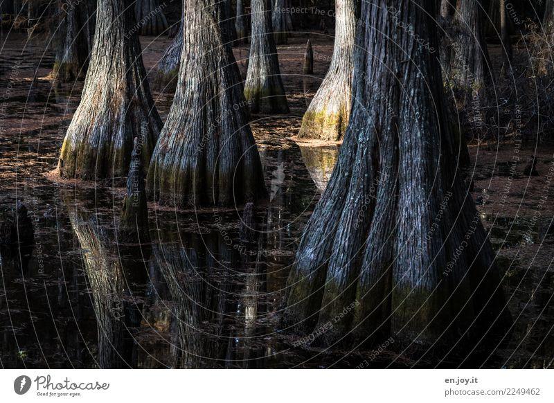 Auf großem Fuß leben Natur Ferien & Urlaub & Reisen Pflanze Wasser Landschaft Baum dunkel Umwelt Traurigkeit See braun Wachstum Abenteuer USA Klima Trauer