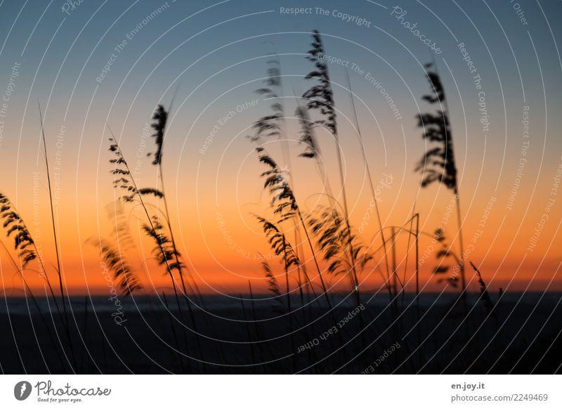 Am Ende des Tages Natur Landschaft Pflanze Himmel Nachthimmel Horizont Sonnenaufgang Sonnenuntergang Sommer Strandhafer Gras dunkel orange schwarz Traurigkeit