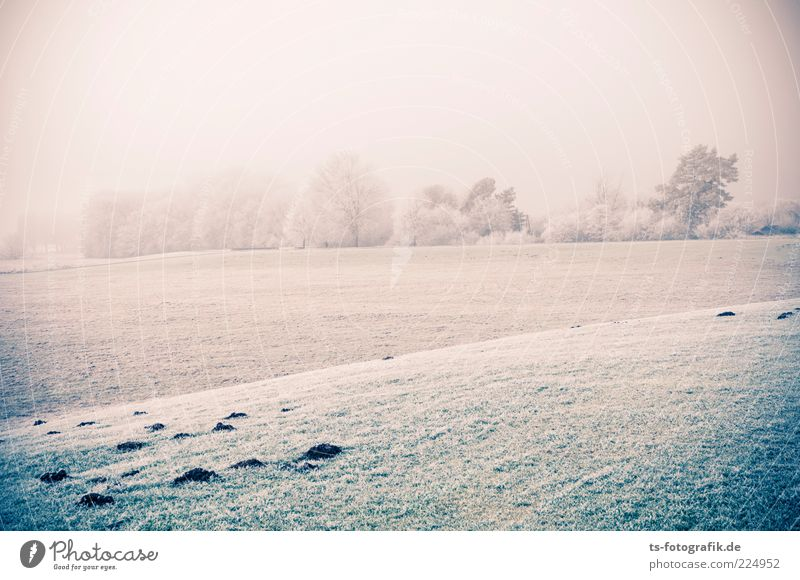Nebel und Eis Natur weiß grün Baum Pflanze Winter kalt Wiese Schnee Landschaft Gras Umwelt Wetter Feld Horizont