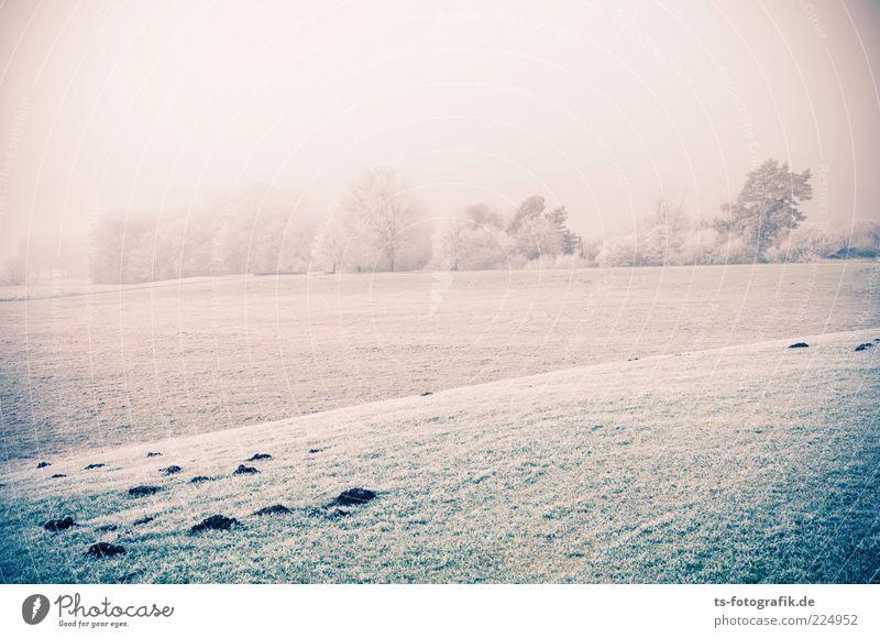 Nebel und Eis Umwelt Natur Landschaft Pflanze Urelemente Winter Wetter Frost Baum Gras Wiese kalt grün weiß Raureif Schneelandschaft Horizont Hügel