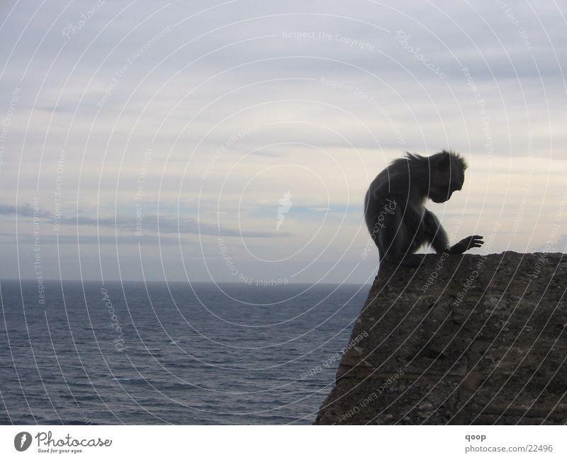 Affe, Felsen, Meer auf Bali Affen wild Tier Indonesien Schreibtisch Silhouette Sonnenuntergang Dämmerung Wolken See Los Angeles Ulu Watu Wallpaper Siluette