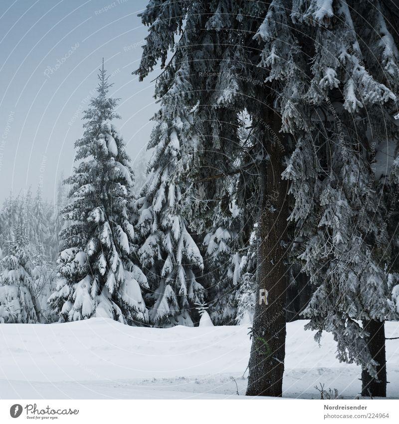 R ruhig Winter Schnee Natur Landschaft Klima Eis Frost Baum Wald Wege & Pfade Zeichen Schriftzeichen Erholung Stimmung Thüringer Wald Thüringen Rennsteig Fußweg