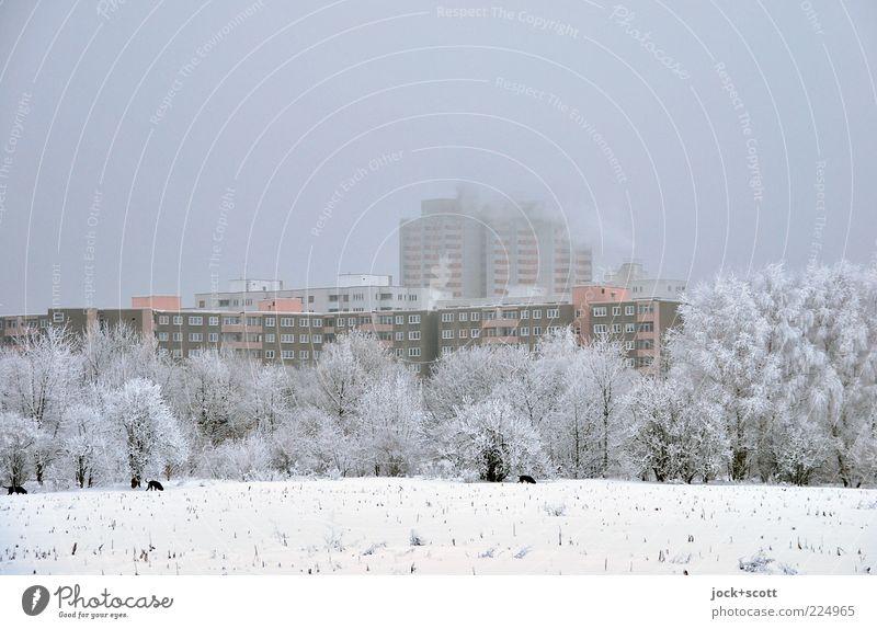 Winterruhe am Stadtrand Himmel schlechtes Wetter Nebel Eis Frost Schnee Baum Feld Marienfelde Stadthaus Wohnhochhaus Fassade groß kalt modern grau weiß Stimmung