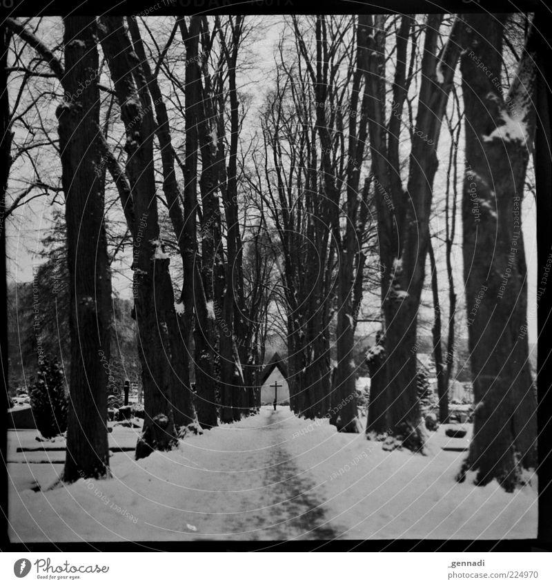 Lebenslauf Baum ruhig Winter kalt dunkel Schnee Tod Landschaft grau Umwelt Wege & Pfade Traurigkeit dreckig trist Trauer authentisch