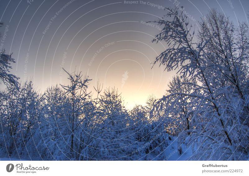 Winterwunderwelt Himmel Natur weiß Baum blau Pflanze ruhig Winter Wald kalt Schnee Umwelt Eis Klima Frost Sträucher
