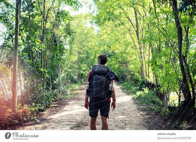 Into the Wild Mensch Natur Ferien & Urlaub & Reisen Mann grün Einsamkeit Ferne Wald Erwachsene Leben Gesundheit Wege & Pfade Tourismus Freiheit Ausflug