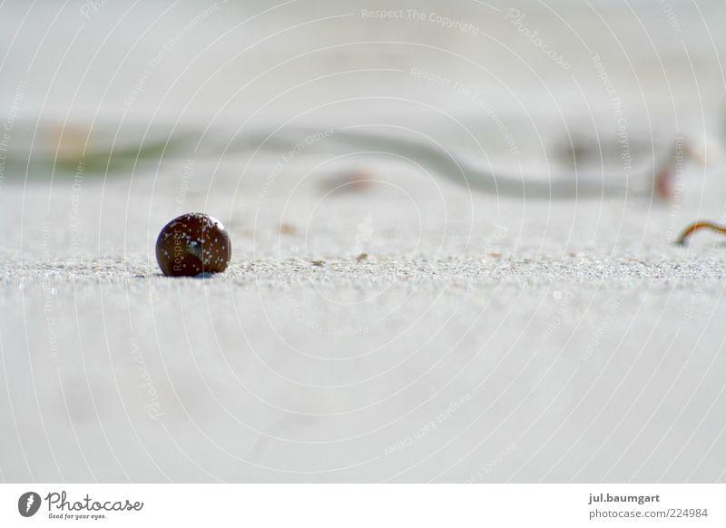 Strandmurmel Natur Sommer Strand Umwelt Landschaft Sand Stein Stil hell glänzend ästhetisch authentisch rund einfach einzeln Kugel