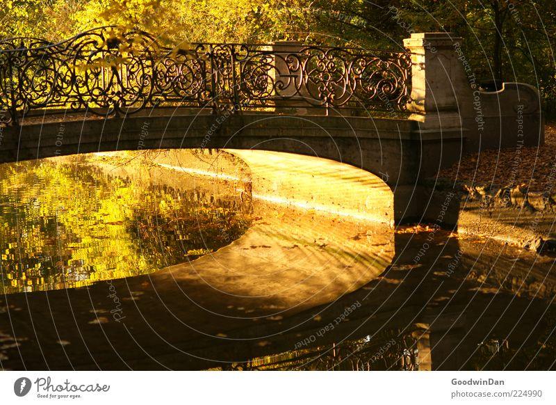 Brückenmagie Umwelt Natur Wasser Sonnenaufgang Sonnenuntergang Sonnenlicht Herbst Wetter Schönes Wetter Park alt einfach nass schön Wärme Gefühle Stimmung