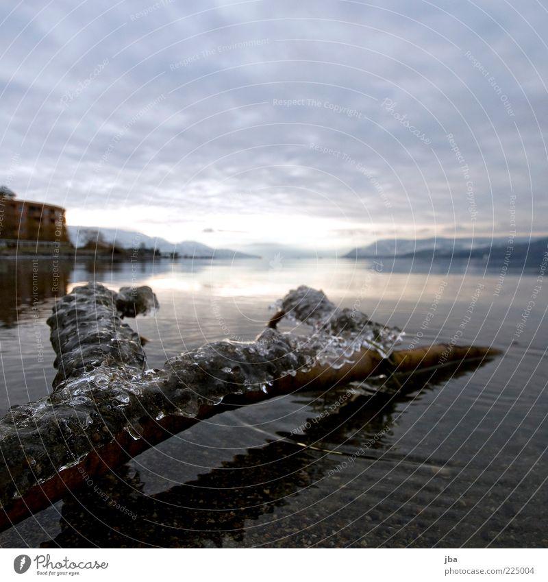 Eis ruhig Ferne Winter Natur Wasser Frost Seeufer Okanagan See Kelowna Kanada Nordamerika Holz frieren Flüssigkeit kalt nass gefroren Tod Wolkenhimmel Farbfoto