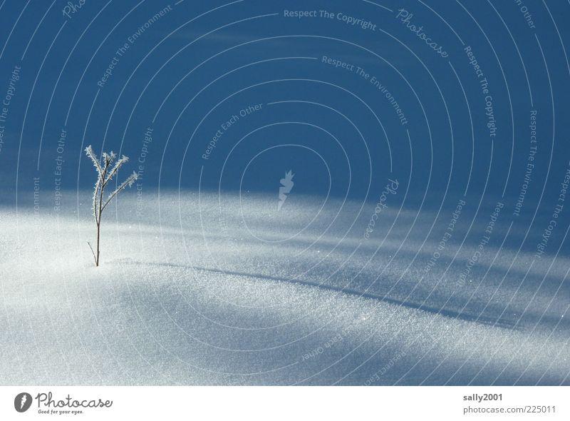 Sonniges Winterplätzchen Natur weiß Baum Pflanze ruhig Winter Einsamkeit kalt Schnee Landschaft Umwelt klein Beginn ästhetisch Wachstum natürlich