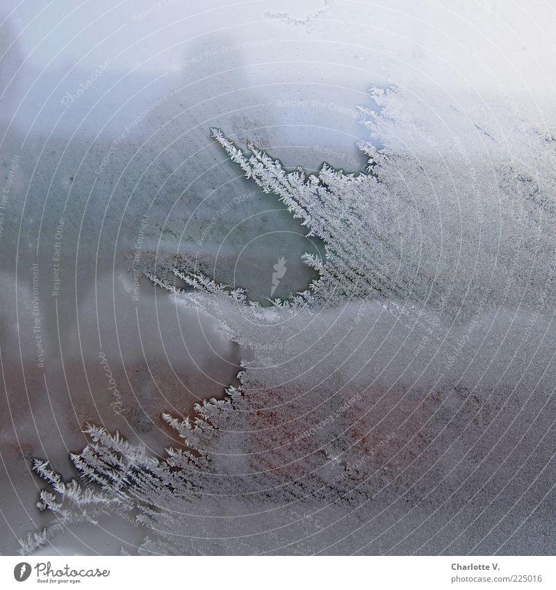 Zugefroren weiß blau Winter kalt Schnee Fenster braun Eis Glas Frost Aussicht durchsichtig Fensterscheibe Kristallstrukturen schlechtes Wetter