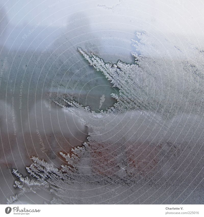 Zugefroren Winter schlechtes Wetter Eis Frost Schnee Menschenleer Fenster Blumentopf kalt blau braun weiß Eisblumen Fensterscheibe Durchblick Kristallstrukturen