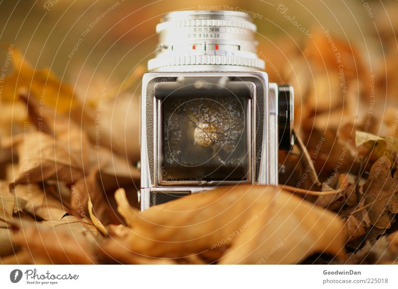 Der Vorgang II Umwelt Natur Urelemente Erde Herbst Blatt Fotokamera Sucher Mittelformat außergewöhnlich authentisch eckig frisch einzigartig retro schön viele