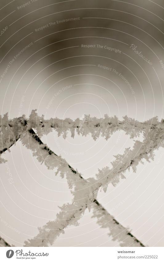 SchneeZaun Natur Wetter schwarz weiß kalt Frost Eiskristall Maschendrahtzaun Winter Makroaufnahme Außenaufnahme Nahaufnahme Detailaufnahme Tag Unschärfe