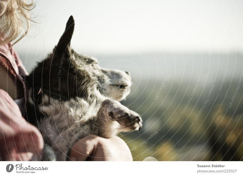 Sonnengruß Tier Hund Tiergesicht Pfote Erholung liegen schlafen tragen Brust Sonnenbad Außenaufnahme Nahaufnahme Abend Dämmerung Sonnenlicht Tierporträt