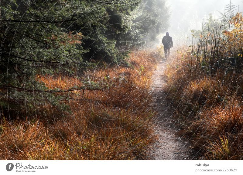 Mann geht auf Waldweg im Nebel und im Sonnenschein Ferien & Urlaub & Reisen Mensch Erwachsene Natur Landschaft Herbst Wetter Baum Gras Straße Wege & Pfade wild