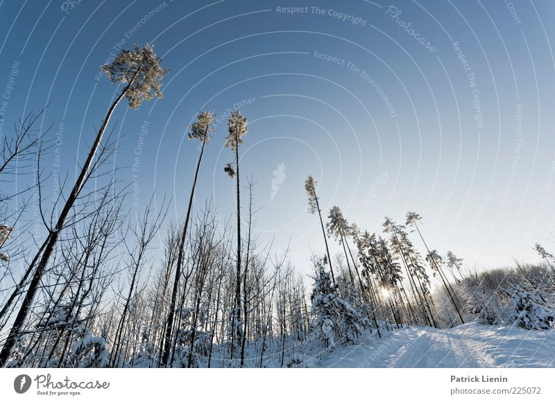 Mr Blue Sky Umwelt Natur Landschaft Pflanze Urelemente Luft Himmel Wolkenloser Himmel Sonnenlicht Winter Klima Klimawandel Wetter Schönes Wetter Schnee Baum