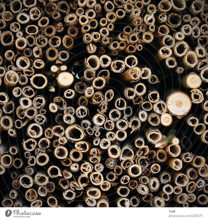 oO.o.Oo Natur alt Pflanze Umwelt Anhäufung hohl Durchschnitt Nahaufnahme Holzstapel Abholzung Biomasse Holzstruktur Totholz Holzwirtschaft Holzstab
