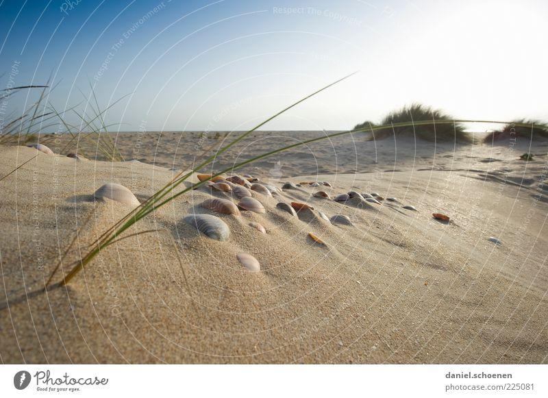 neulich am Strand Natur blau Sonne Sommer Ferien & Urlaub & Reisen Meer Erholung Landschaft Umwelt Gras Sand Küste hell Horizont Insel