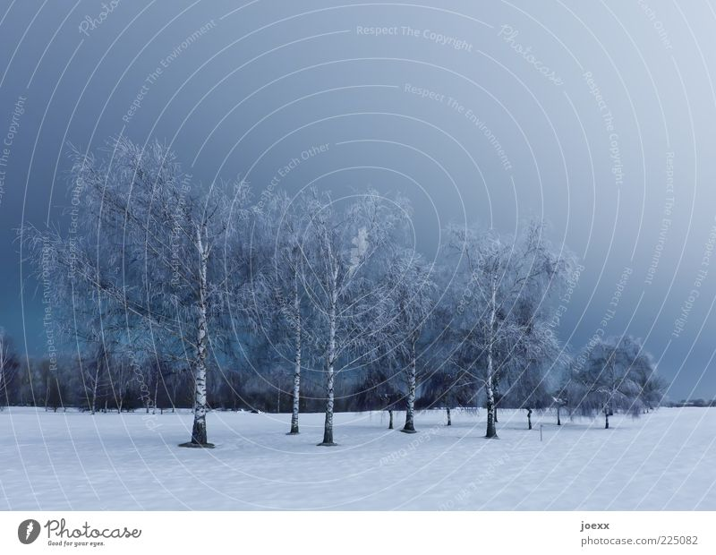 Birken Himmel Natur weiß blau Baum ruhig Winter kalt Schnee Landschaft Park Eis groß Frost Schneelandschaft kahl