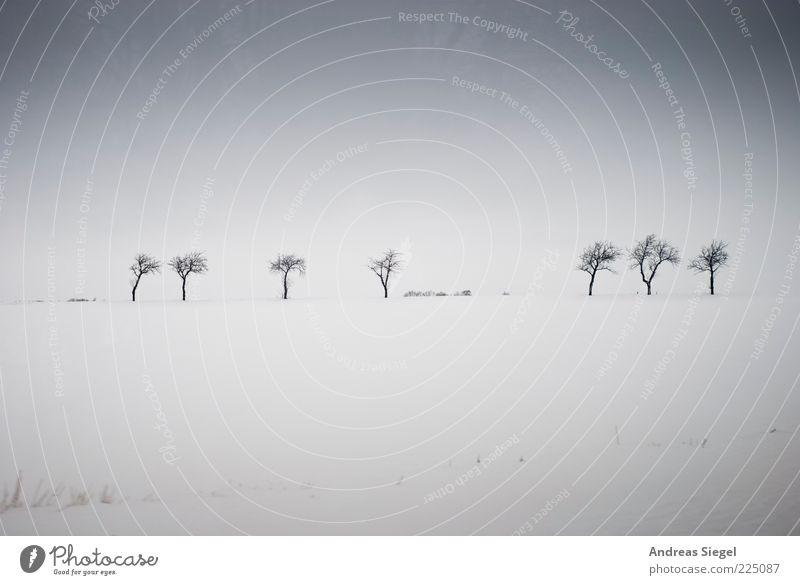 Winterbäume Umwelt Natur Landschaft Himmel Eis Frost Schnee Baum Wiese Feld dunkel einfach frei grau weiß Zufriedenheit Einsamkeit Freiheit Horizont kalt