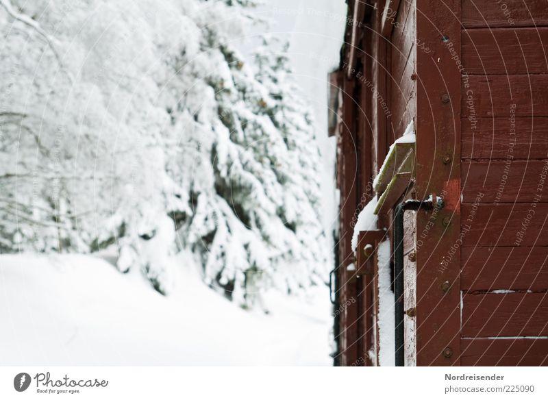 Polarexpress Winter Schnee Güterverkehr & Logistik Natur Landschaft Klima Verkehr Schienenverkehr Eisenbahn Güterzug kalt Perspektive stagnierend Stimmung
