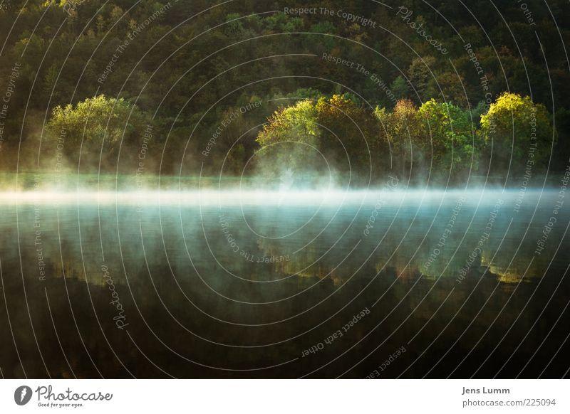 What's the story morning glory? Wasser grün Baum ruhig Landschaft Nebel Flussufer Spiegelbild Dunst Verdunstung Waldrand Morgennebel Wasserspiegelung