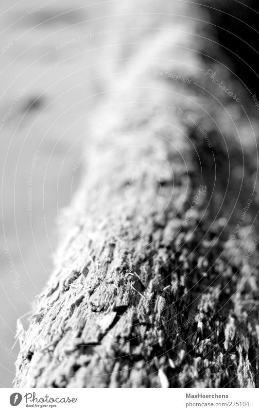Baumstamm Natur Pflanze fest ruhig Tiefenschärfe Schwarzweißfoto Außenaufnahme Detailaufnahme Muster Strukturen & Formen Menschenleer Tag Kontrast Unschärfe